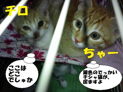 20120618_1.jpg