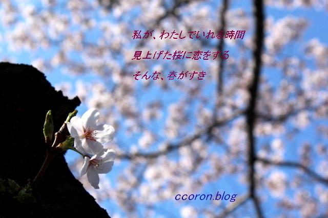 IMG_2053 (640x427)
