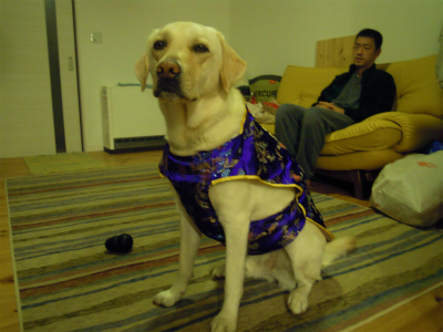 sdog 001 001