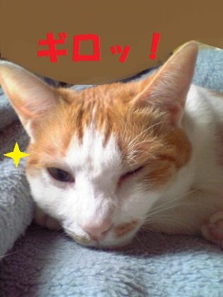 013_20120701021830.jpg