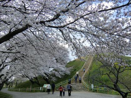 春の丸墓山登り口南
