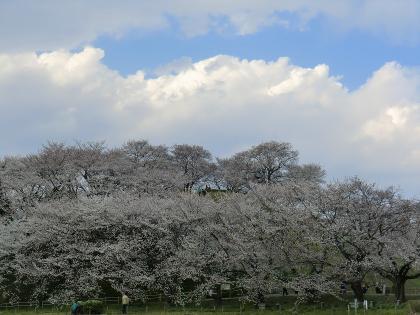 春の丸墓山全体