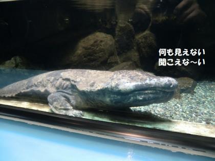 さいたま水族館3