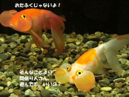 さいたま水族館4