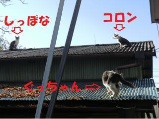 g0_20120518231005.jpg