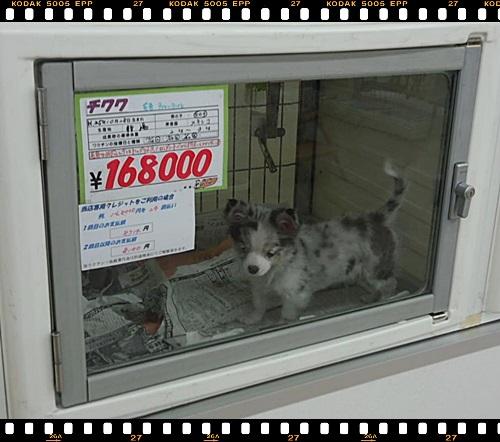 5216494898.jpg