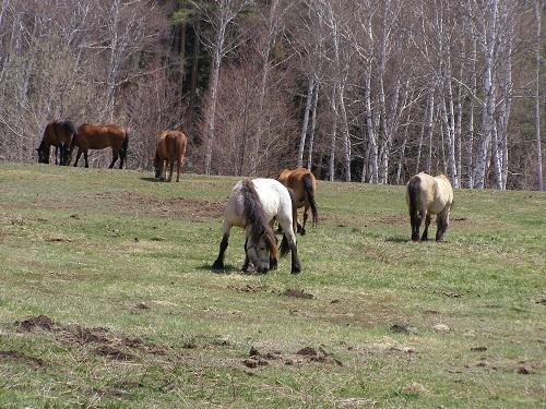 20130505木曽馬