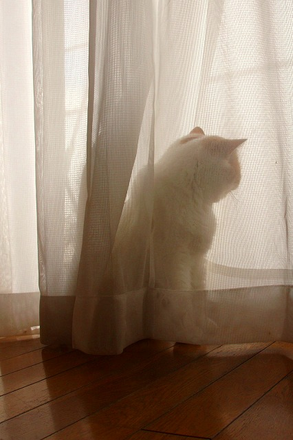 ジャムという名の猫5