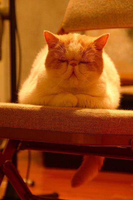 ジャムという名の猫3