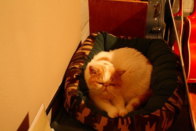 ジャム用ベッド