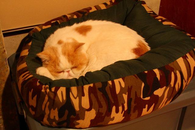ジャム用ベッド2