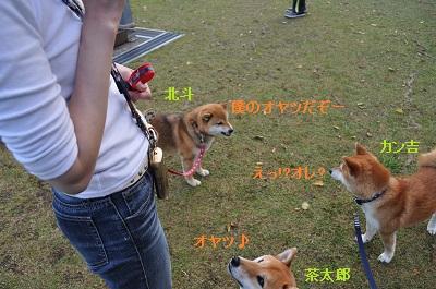 DSC_0186_20130411002843.jpg
