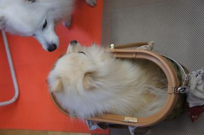 箱入りオカマでちよ