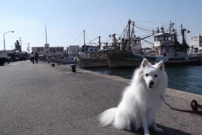 漁港でしゅね