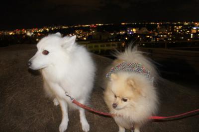 夜景が綺麗でしゅ。けど寒いでしゅ・・・