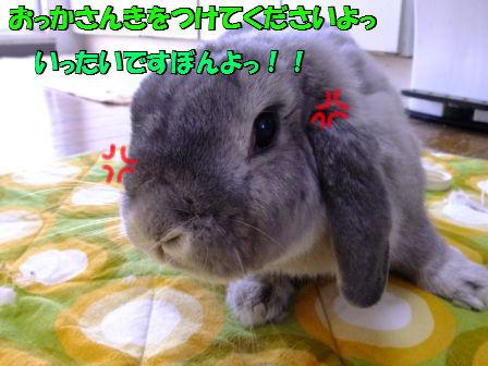 DSCF7682_20120711040121.jpg