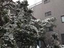 IMG_3983yuki.jpg