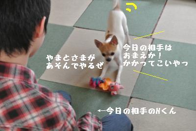 20120103+031_convert_20130104160038.jpg