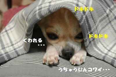 20120105+030_convert_20130105224834.jpg