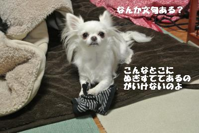 20120105+046_convert_20130106104024.jpg