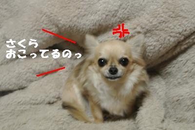 20120112+001_convert_20130112084537.jpg
