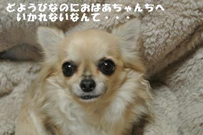 20120112+003_convert_20130112084644.jpg