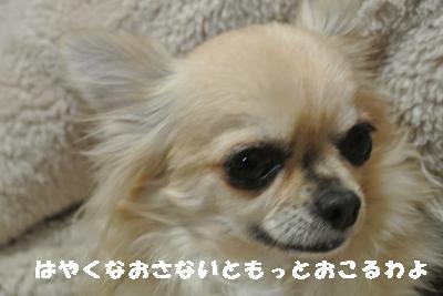 20120112+004_convert_20130112085142.jpg