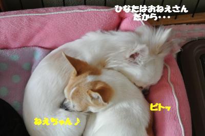 20120312+013_convert_20130314110747.jpg