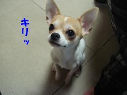 螟ァ蜥・豁ウ_convert_20120626100754