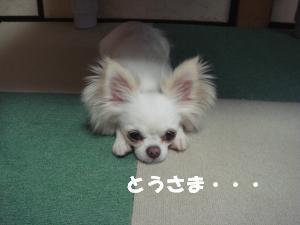 蟆城未+221_convert_20120705114202