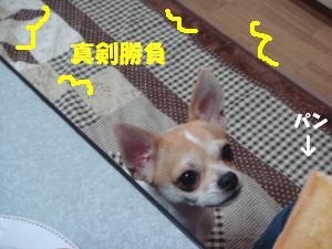 蟆城未+252_convert_20120709111407