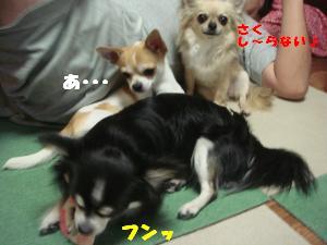 蟆城未+303_convert_20120710104714