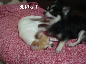 蟆城未+324_convert_20120713092738