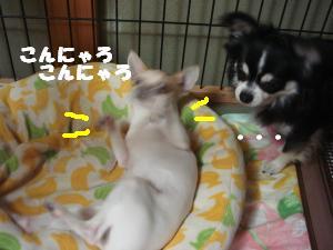 蟆城未+339_convert_20120713091836