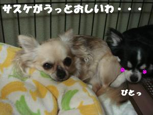 蟆城未+403_convert_20120720104827