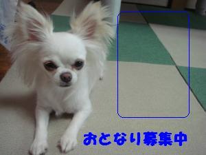 蟆城未+406_convert_20120720104631