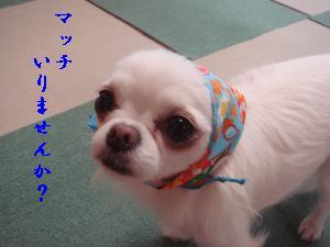 蟆城未+423_convert_20120723133446