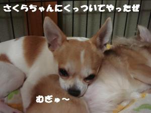 蟆城未+444_convert_20120727101921