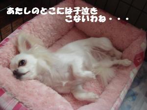 蟆城未+464_convert_20120727105815