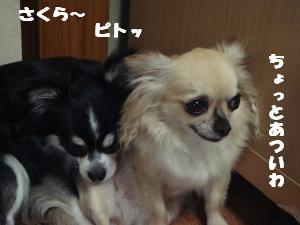 蟆城未+344_convert_20120731131800