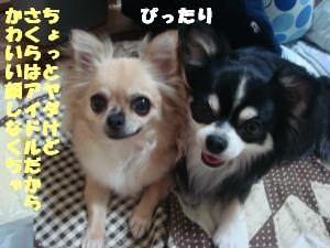 蟆城未+505_convert_20120731132218