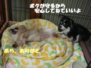 蟆城未+514_convert_20120731132017