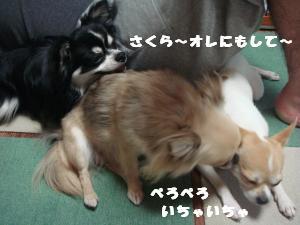 蟆城未+580_convert_20120803104225