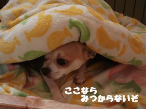 蟆城未+545_convert_20120803155916