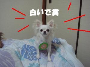 蟆城未+604_convert_20120806112412