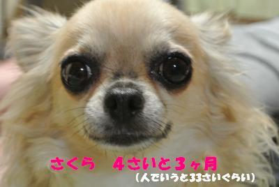 蟆城未+722_convert_20120820105717