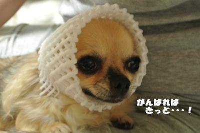 蟆城未+765_convert_20120821110702