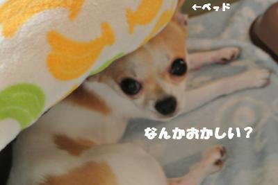 蟆城未+812_convert_20120822092843