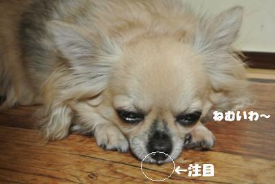 蟆城未+810_convert_20120822093434