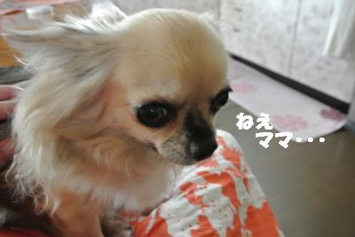蟆城未+791_convert_20120824094300